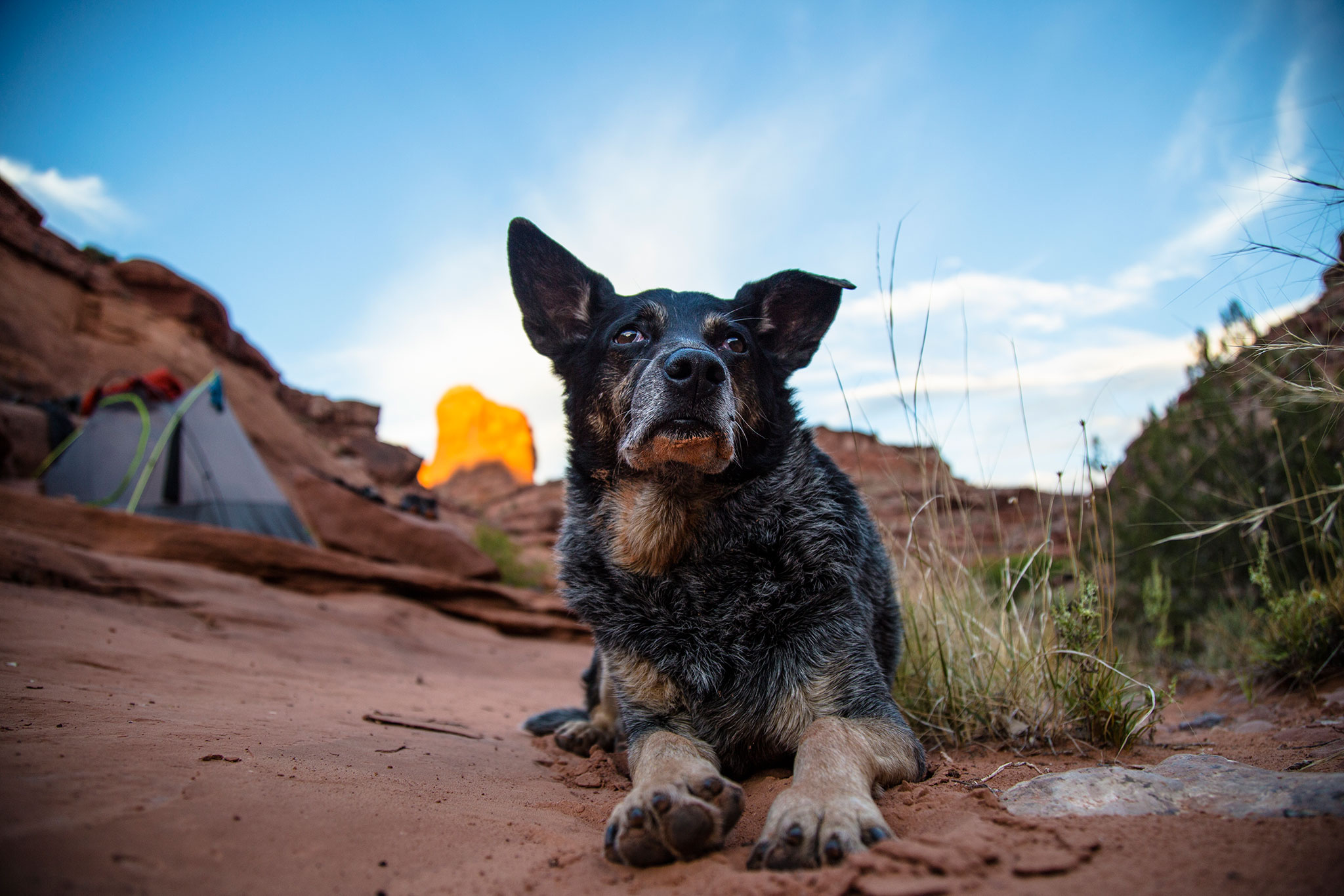 Ace And The Desert Dog Movie