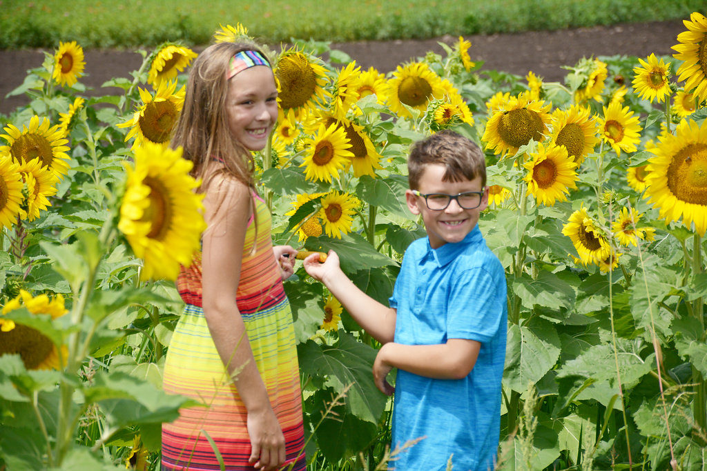 Sunflower Festival comes to Kalamazoo
