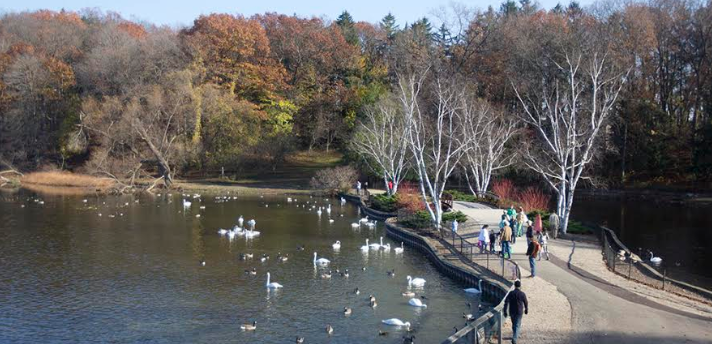 Celebrate the fall migration of waterfowl at the Kellogg Bird Sanctuary