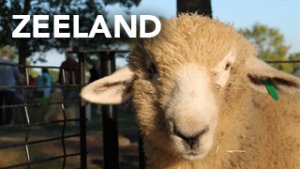 Zeeland Guide