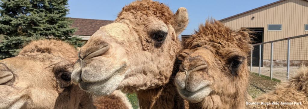 West Michigan Zoos & Animal Encounters